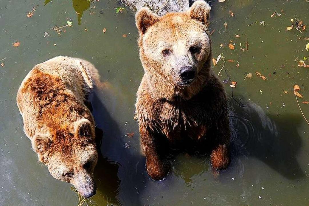Janosch und Joschi  im Wasser des Bäre...  für ihre Eltern errichtet worden war  | Foto: Ingo Schneider