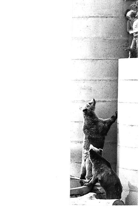 Neugierige Bären  | Foto: BZ-Archiv