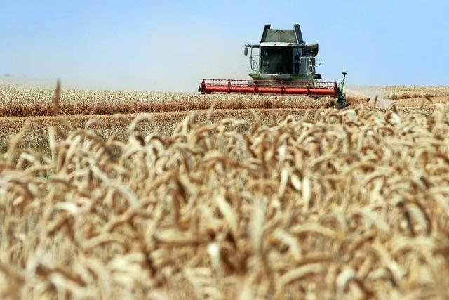 Die Dürre treibt den Preis für Weizen in die Höhe