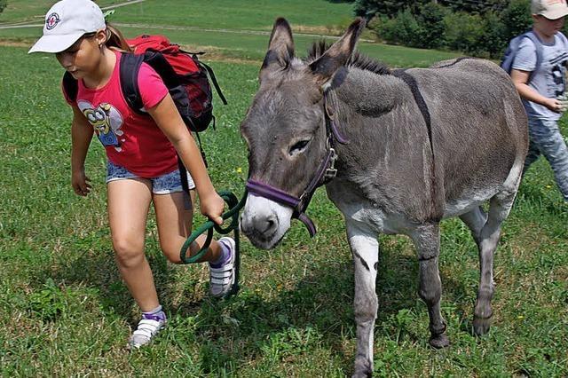 Kinder lernen viel über Esel und Wildkräuter