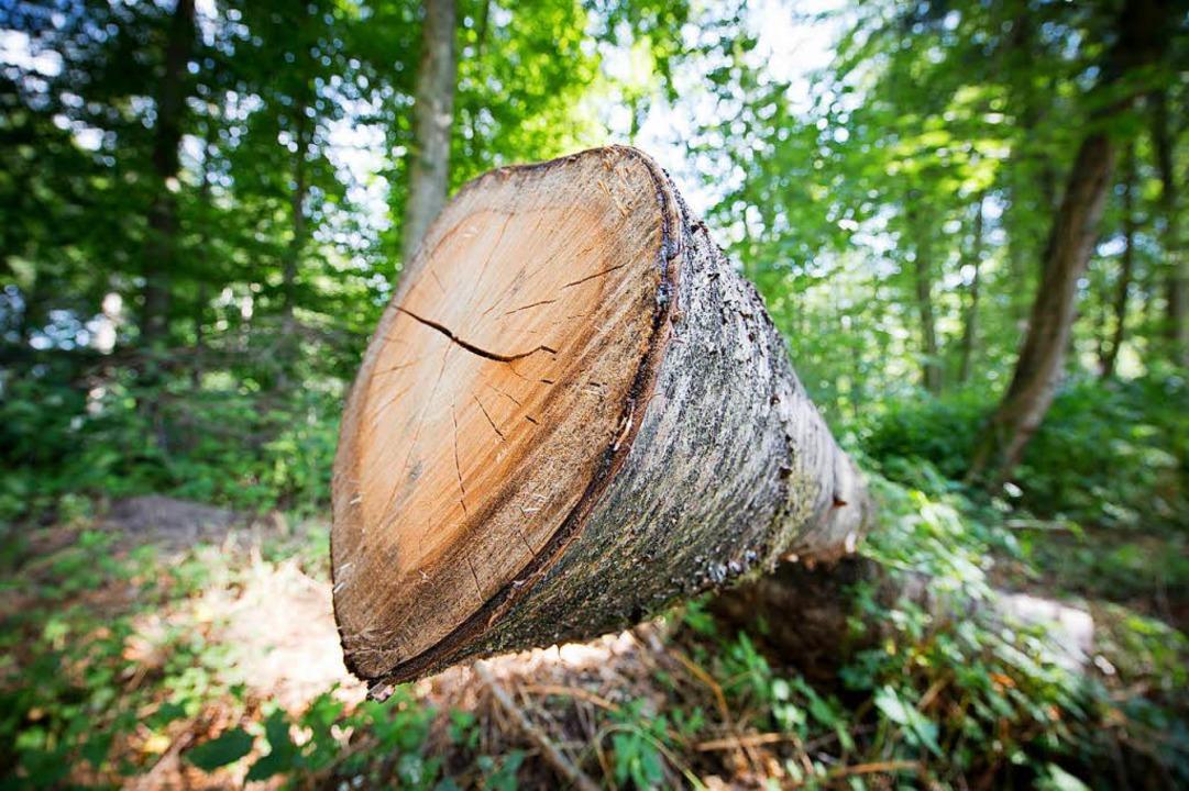 Der große Vorteil des Baustoffs Holz besteht darin, dass er nachwächst.  | Foto: dpa