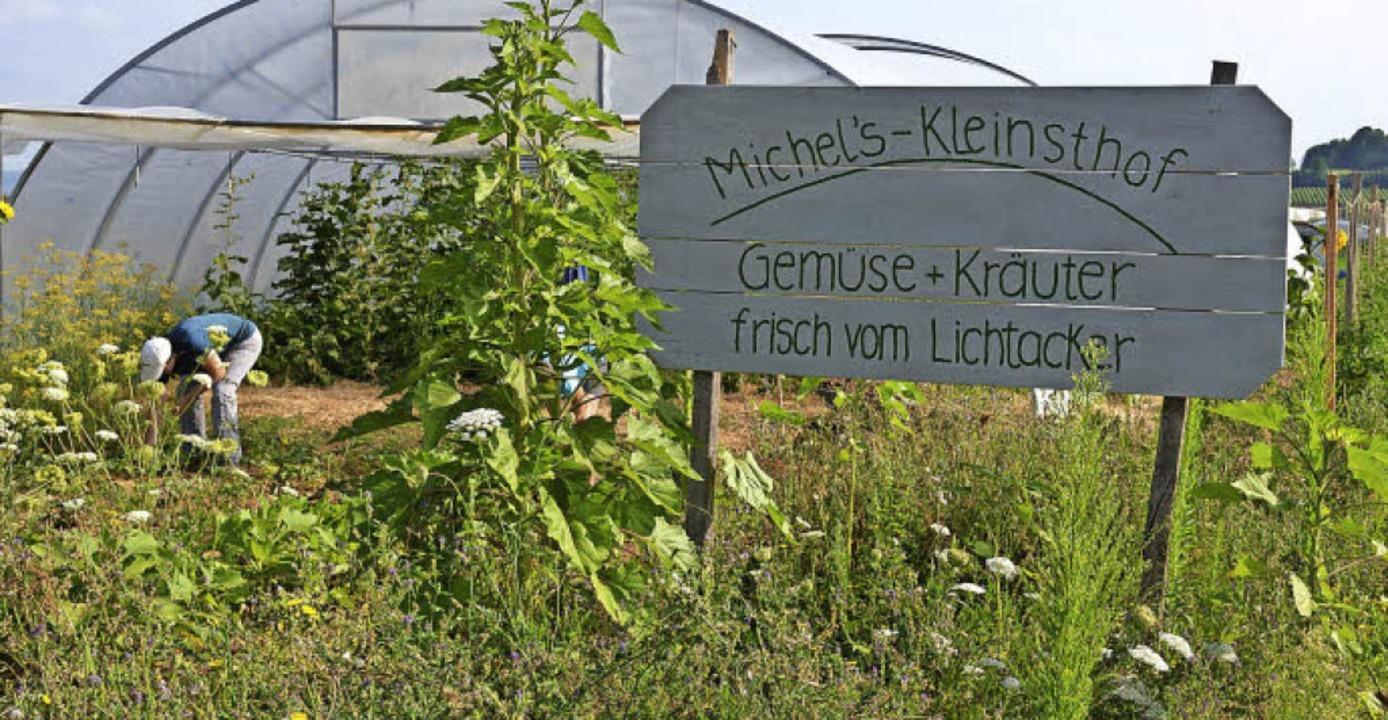 Nur die Tomaten stehen im Folientunnel...n ein Sterne-Restaurant in der Gegend.  | Foto: Gabriele Hennicke