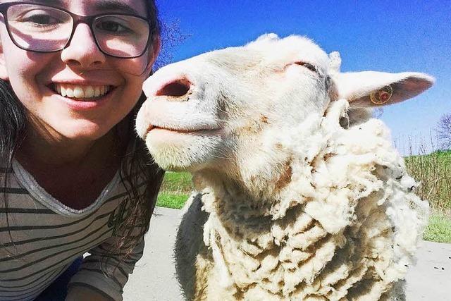 Selfie mit einem Schaf im Kaiserstuhl