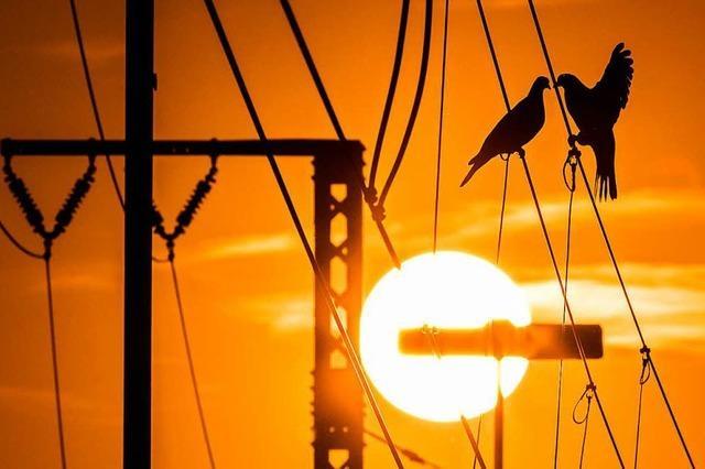 Warum bekommen Vögel auf Stromleitungen keinen Schlag?