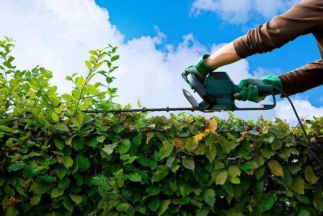 Streit um Gartenarbeit: Müssen Mieter Unkraut jäten?
