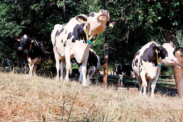Aussicht auf Hilfe für Bauern