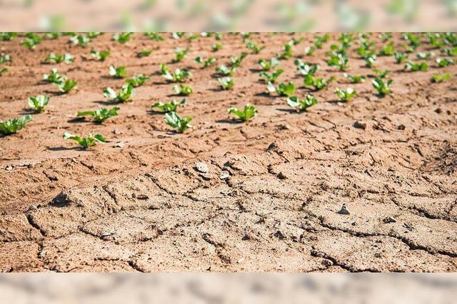 Überflüssiger Wettstreit um die besseren Hilfen für Bauern