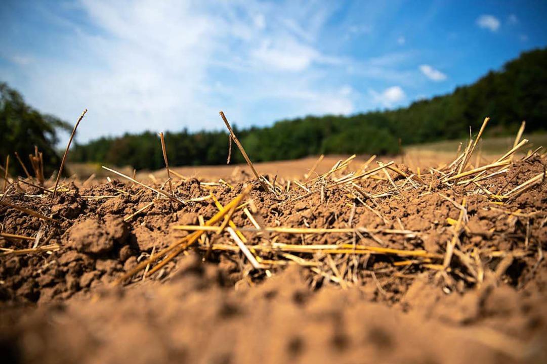 Trockenheit soweit das Auge reicht: die Bauern fürchten um ihre Ernte.    Foto: dpa