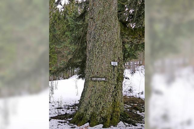 Flucht in die Abgeschiedenheit des Südschwarzwalds