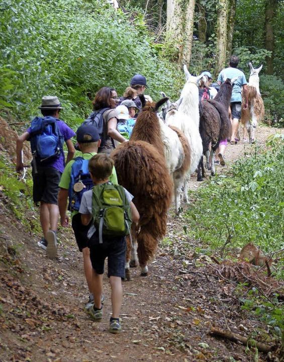 Auf engen Pfaden gehen Kinder und Lamas Seite an Seite.  | Foto: Claudia Bachmann-Goronzy