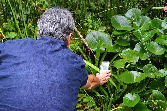 Insektenzählen in Grenzach-Wyhlen mit dem Naturschutzbund