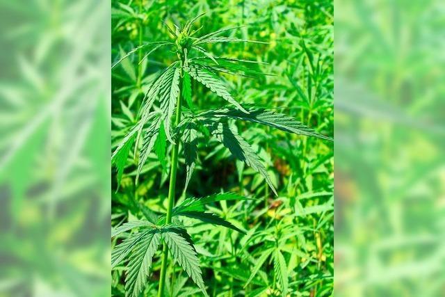 Cannabisgeruch verriet Ort von Jugendlichen