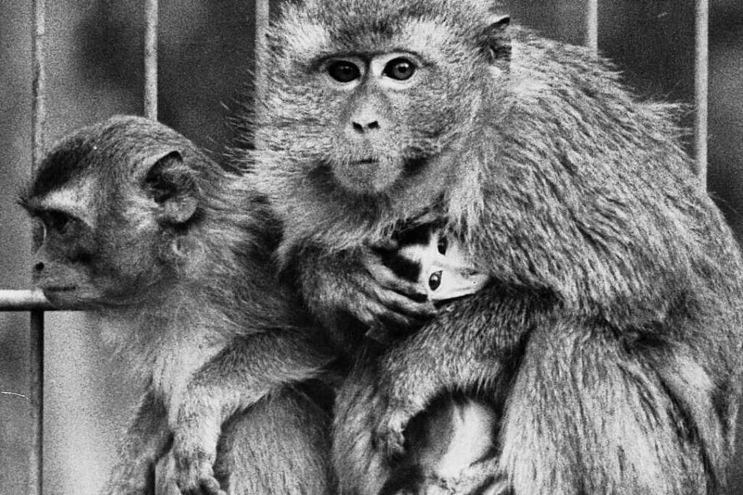 Ein neues Heim bekamen die Javaner-Affen  | Foto: Manfred Richter