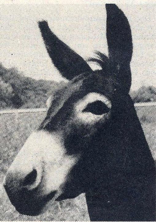 Esel Moritz ist noch immer ein Mundenhof-Symboltier.  | Foto: Privat