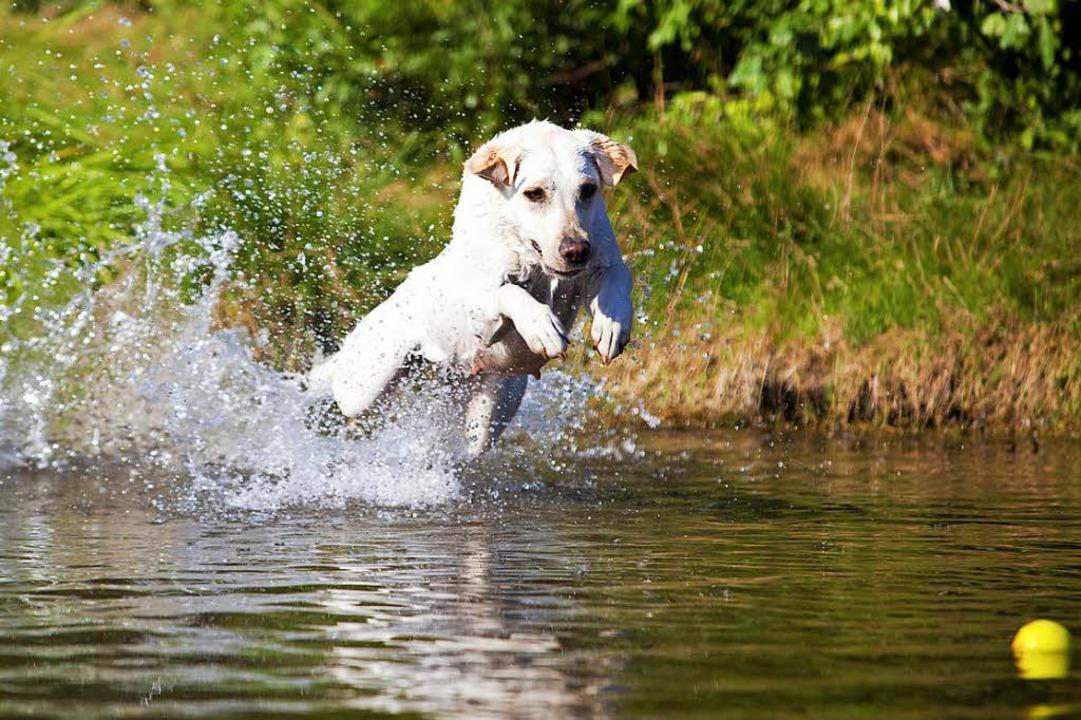 Hunde im Natubadesee sorgen für Ärger bei Badegästen. (Symbolbild)  | Foto: Hammerschmid/Adobe Stock