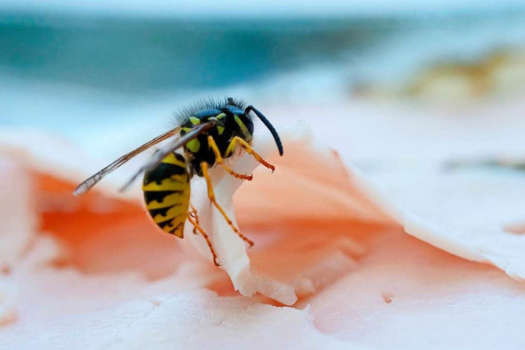 Ein Wespenstich kann für Allergiker  lebensgefährlich werden.   | Foto: dpa