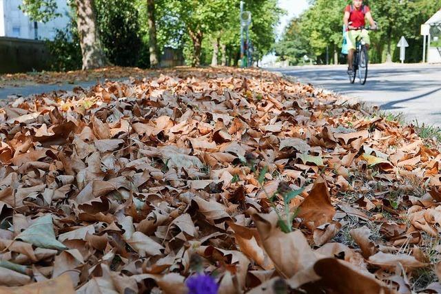 Wenn der Sommer zum Herbst wird