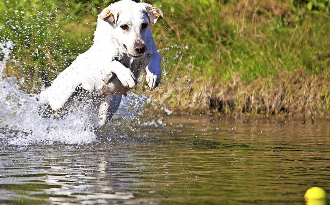 Hunde im Wasser: Für viele ein Ärgerni...unde aus Naturschutzgründen verboten.   | Foto: Symbolfoto: Hammerschmid (stock.adobe.com)