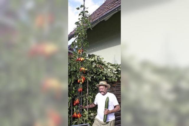 Tomatenriesen