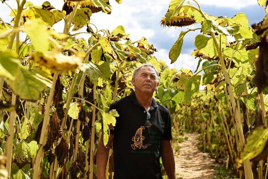 Erwin Wagner in seinem Sonnenblumen-Labyrinth.  | Foto: Rita Eggstein