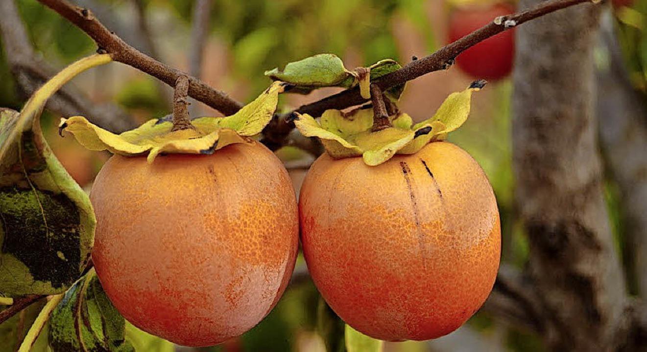 Kaki-Früchte sind auch in Südbaden mit...g auf trockenheitsresistentere Sorten.  | Foto:  dpa