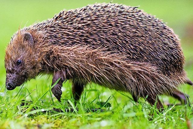Trockenheit bedroht viele Tiere