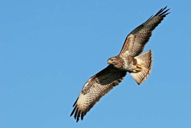 Tierschützer päppeln viele entkräftete Vögel und Igel im Landkreis Lörrach auf