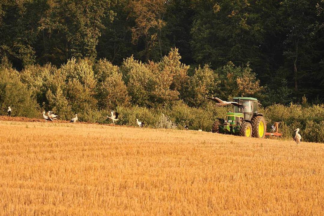 Dort, wo Traktoren das Ackerland umbre... sind auch die großen Vögel betroffen.  | Foto: Jutta Schütz