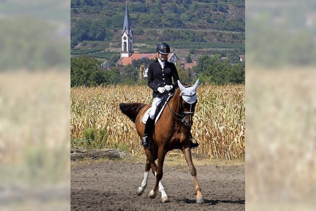 Pferde und Reiter trotzen der Hitze