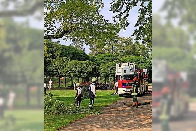 Baumbruch am Stadtrainsee und ein Motorradunfall am Sägedobel