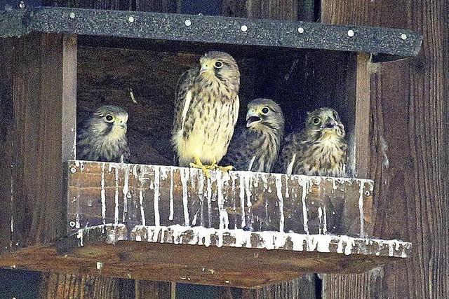 Auch den Vögeln ist es zu heiß, sorgt der Flugwind für Abhilfe?