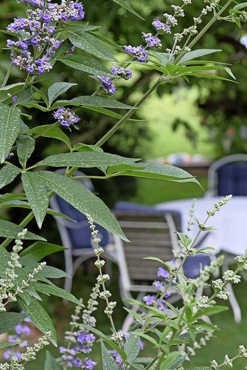 Blüten in verschiedenen Farben schmücken den Garten.  | Foto: Martin Pfefferle