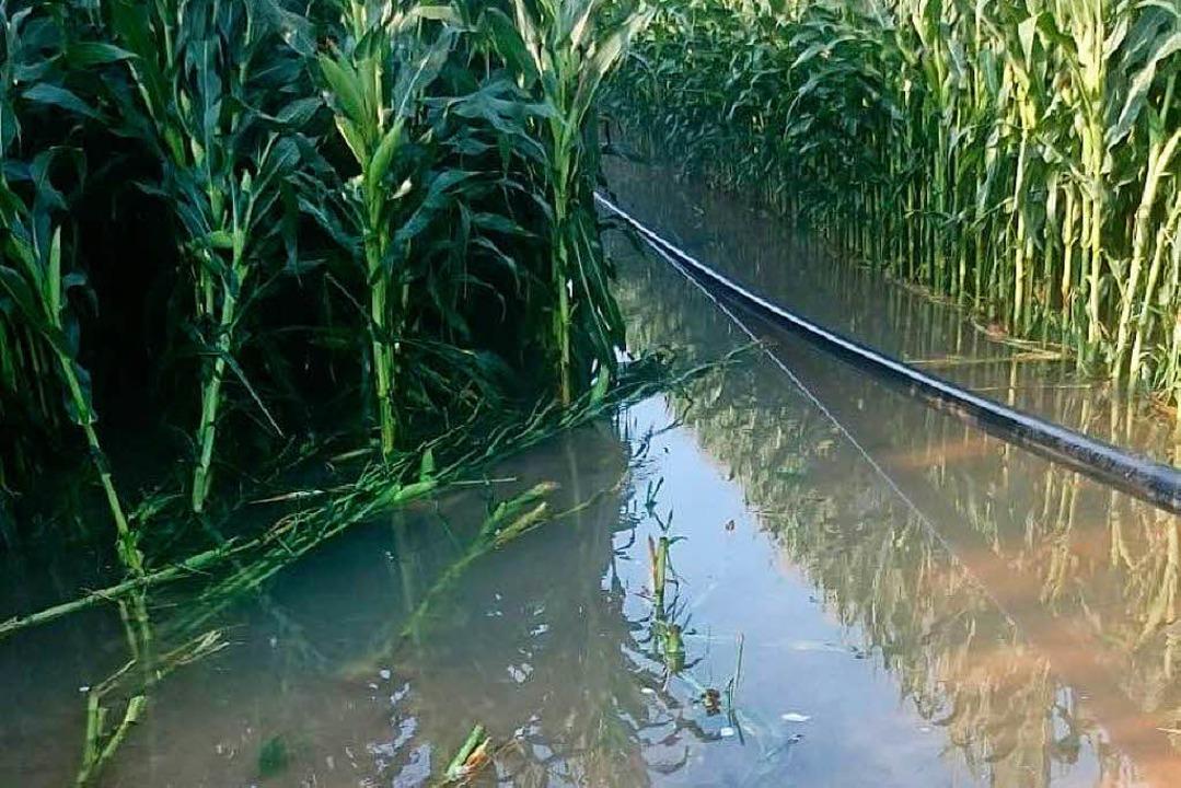 Millionen Liter Wasser treten durch di... aus und zerstören Äcker und Feldwege.  | Foto: Privat