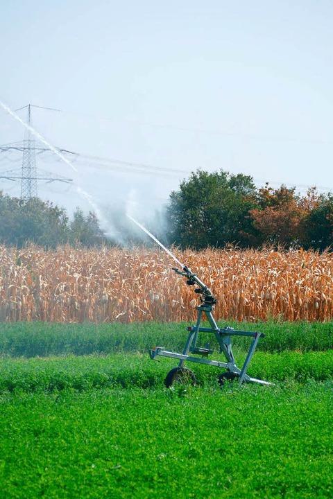 Die Beregnung erfolgt so nachhaltig wie möglich, beteuern die Landwirte  | Foto: Susanne Ehmann