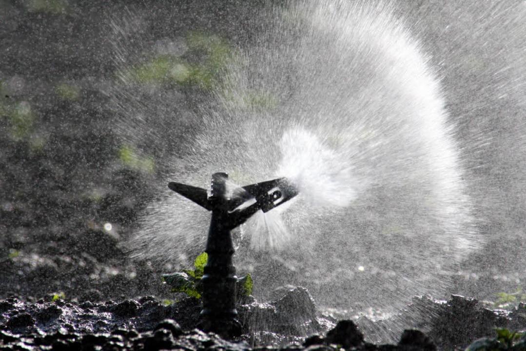 Millionen Liter Wasser versickern.  | Foto: dpa