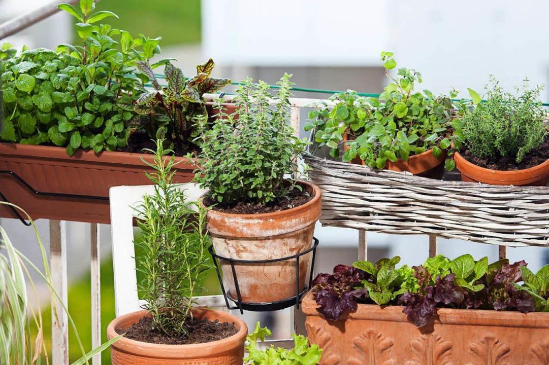 Damit man nicht auf dem eigenen Balkon...e Kleingärten für Wohngebiete weichen.  | Foto: Franz Peter Rudolf | Adobe Stock