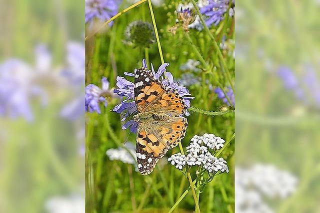 Schmetterlinge in Hülle und Fülle