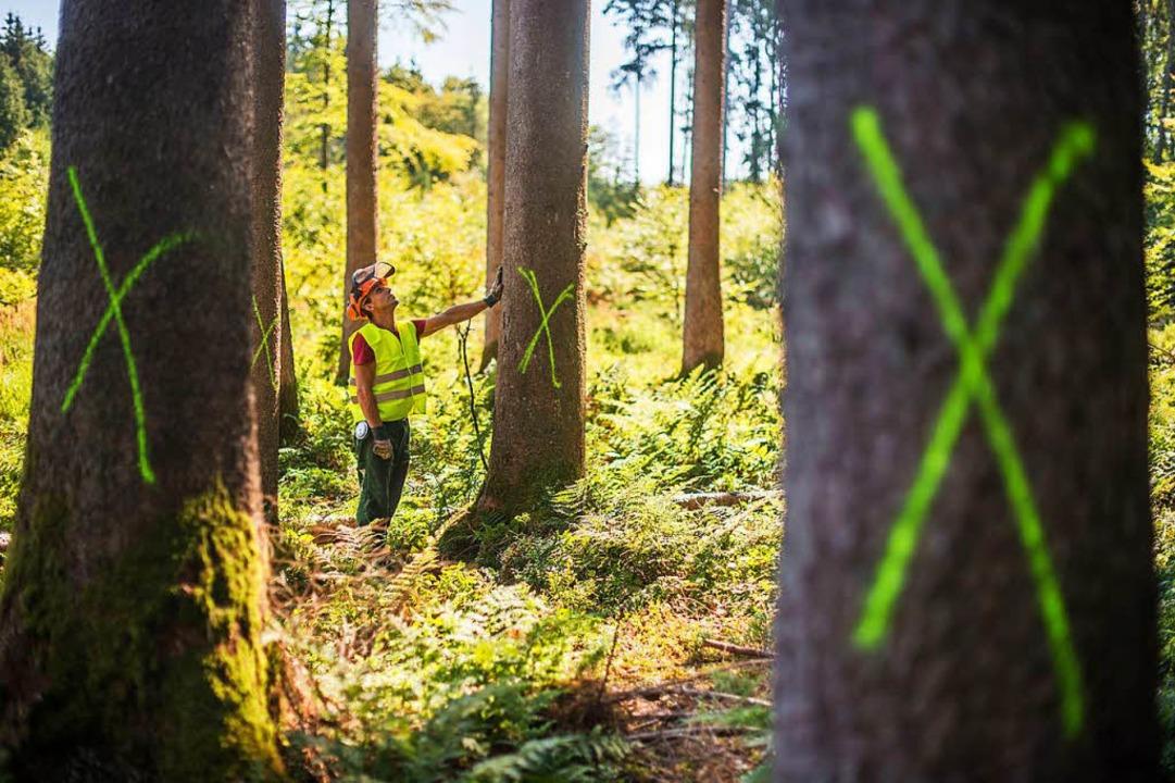 Ioann Popescu, Waldarbeiter bei den Ba... wie möglich aus dem Wald zu schaffen.  | Foto: dpa