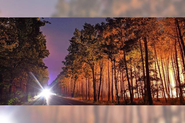 Hektarweise Wald in Flammen