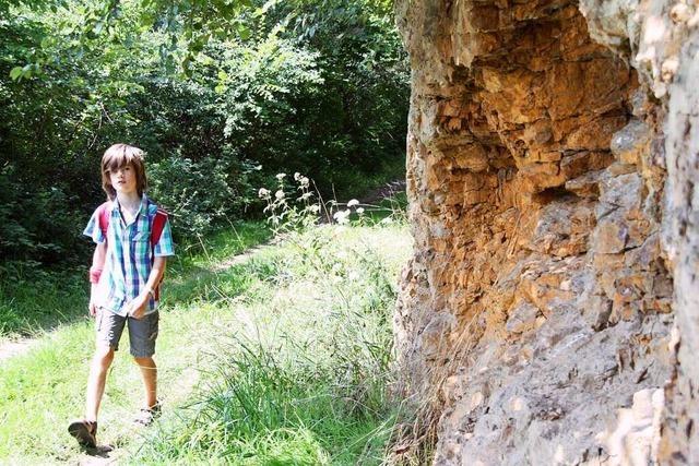 Der Eichstetter Geopfad bietet Aufschlüsse zur Erdgeschichte des Kaiserstuhls