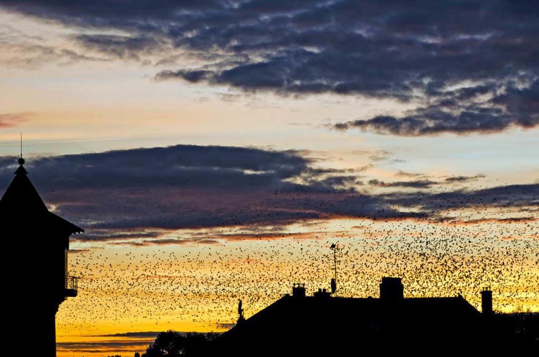 Starenschwarm über Huningue  | Foto: Lutz P. Kayser