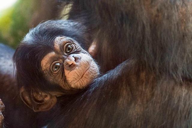 Was sind Primaten?