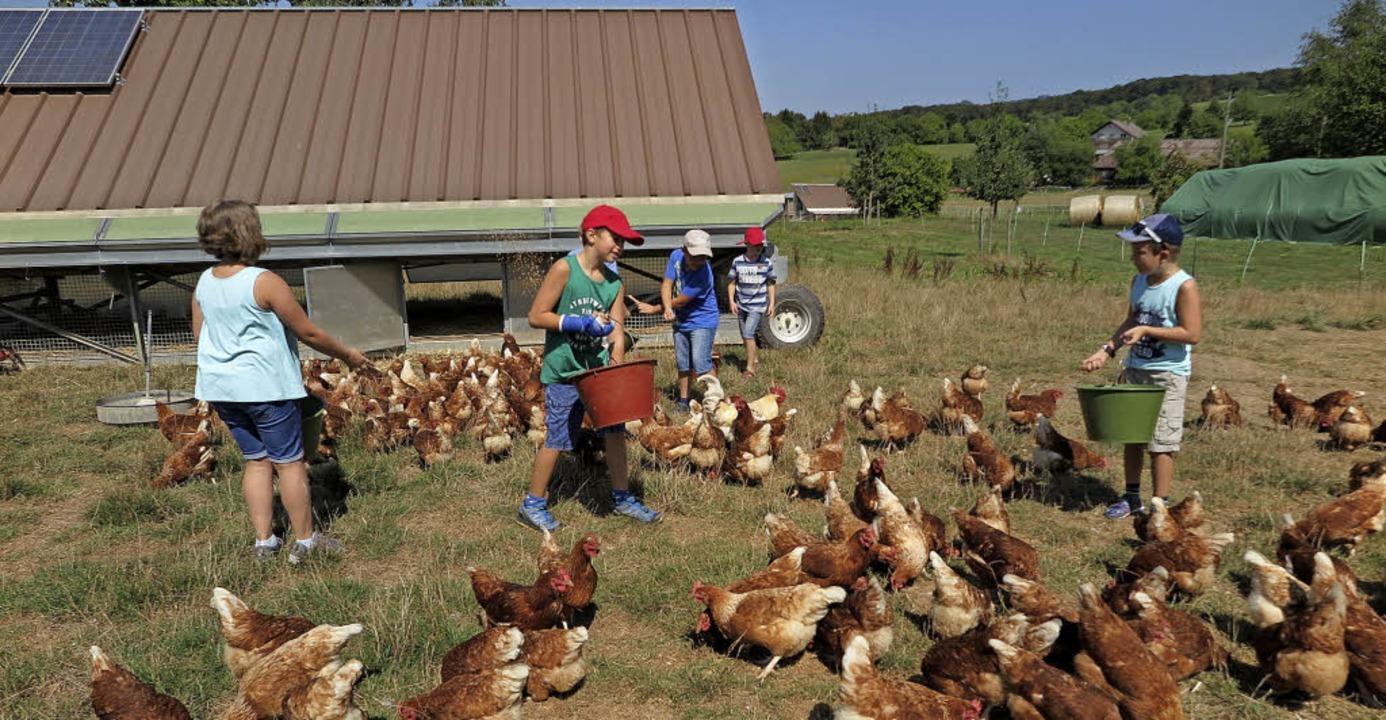 Mit dem Körnerfutter lockten die Kinde... Hühner schnell aus ihren Verstecken.   | Foto: dorothee Philipp