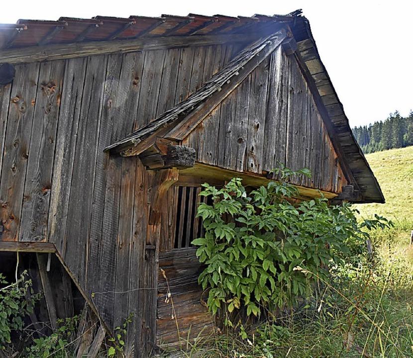 Die versteckte Kapelle aus Holz stammt...ert. Sie ist dem Verfall preisgegeben.  | Foto: Thomas Biniossek