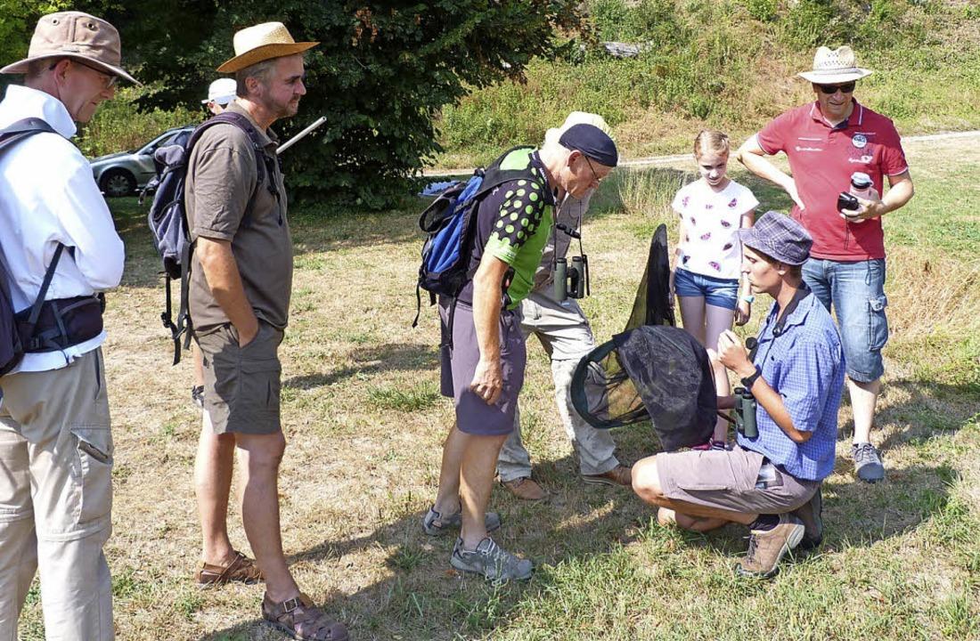 Bei der Heuschrecken-Exkursion am Badb...rig nach den Tieren Ausschau gehalten.    Foto: Christine Weirich