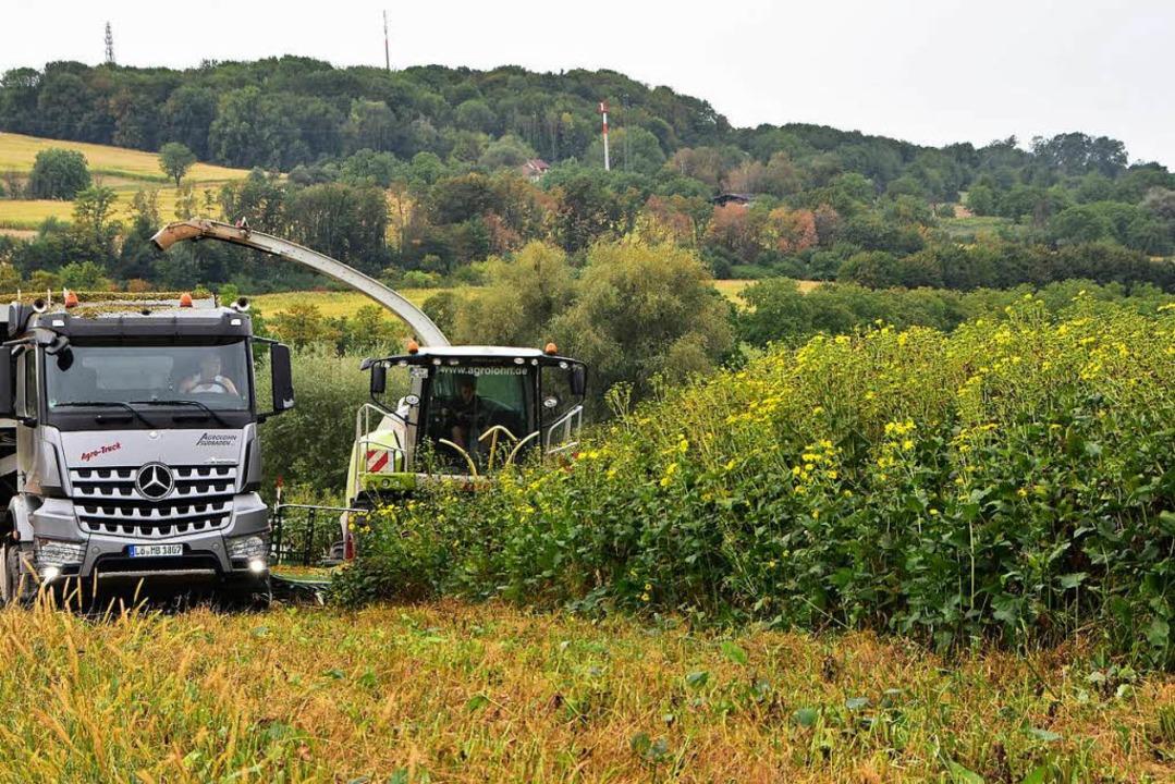 Großeinsatz bei der ersten Ernte der E...  auf einem Feld bei Binzen/Rümmingen.  | Foto: Horst Donner