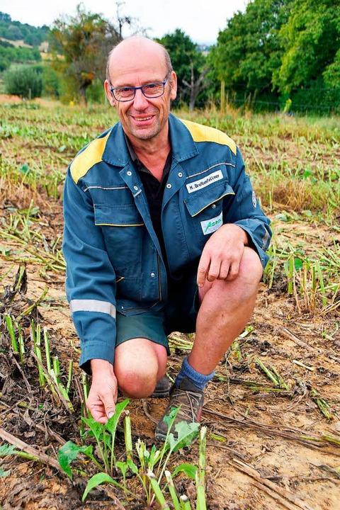 Seniorchef Markus Breitenfellner mit Jungpflanzen.  | Foto: Horst Donner