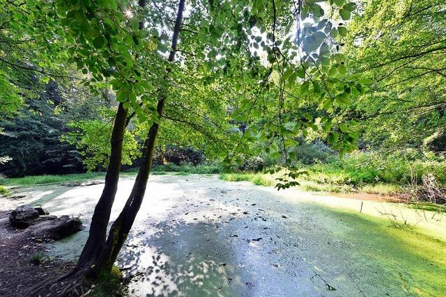 BZ-Leserinnen und Leser erleben den Wald mit allen Sinnen