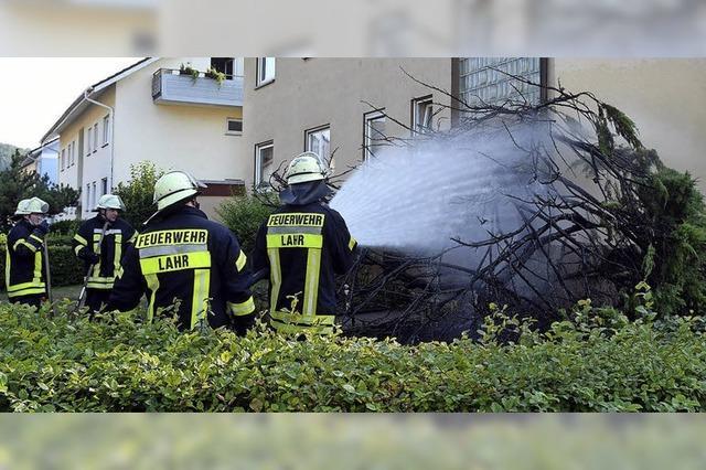 Ein Thujabaum brennt
