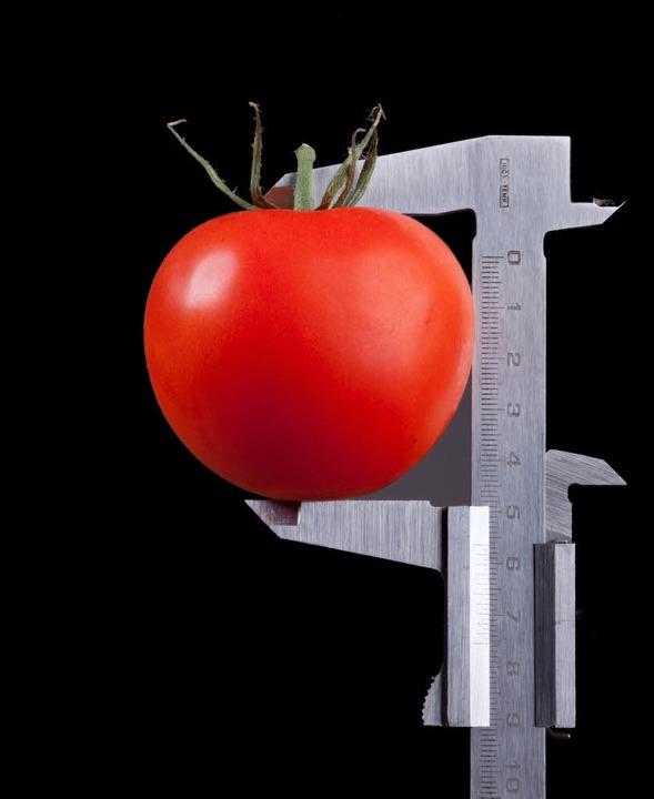 Für Tomaten gibt es zum Glück bislang noch keine DIN-Norm.  | Foto: Photographer: Ruediger Rau